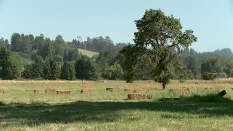 Field-of-Hay-Bales-