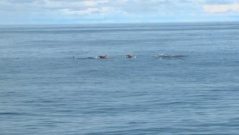 Pod-of-Orcas-2