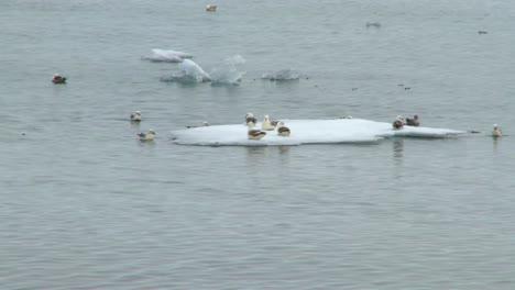 Melting-Sea-Ice-5
