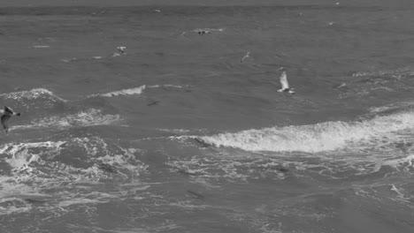 Black-and-White-Waves-Crashing