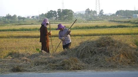 Vietnamese-Ladies-Rake-Hay