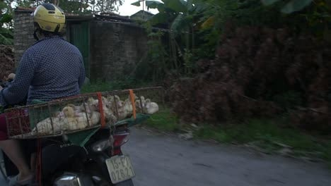 Vietnamese-Woman-on-Scooter