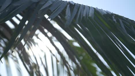 Lens-Flare-Through-Palm-Leaves