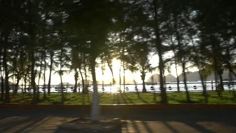 Lens-Flare-Through-Trees-Ha-Long-Bay