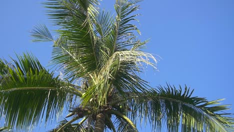 Pan-Across-a-Palm-Tree