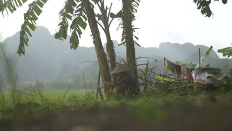 Traditionally-Dressed-Vietnamese-Lady-Sat-under-Banana-Tree-2