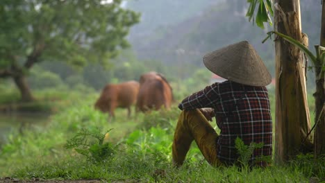 Vietnamese-Lady-Sits-and-Watches-Cattle-Graze