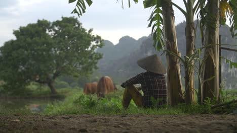 Mujer-vietnamita-viendo-pastoreo-de-ganado