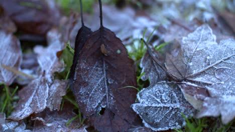 4K-Frozen-Leaves-Tracking-Shot