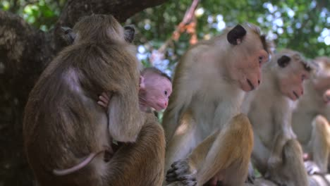 Mother-and-Baby-Monkey