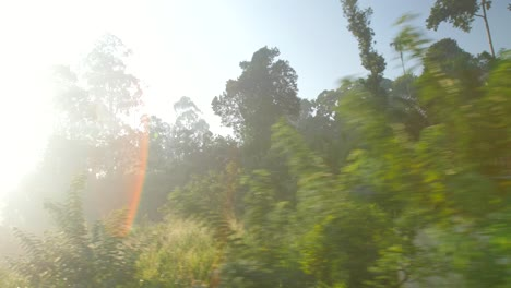 POV-Shot-Travelling-Through-Sri-Lankan-Jungle