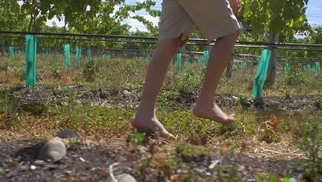 Young-Boy-Walking-Barefoot-Through-Vineyard