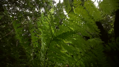 Rotating-Around-Fern-Plant