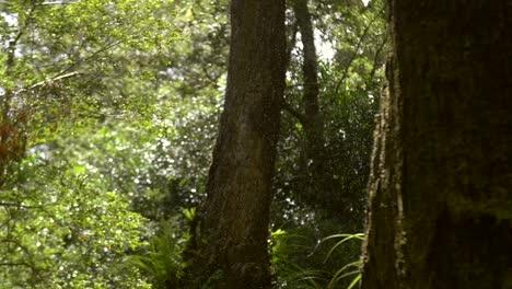 Pull-Focus-on-Light-Jungle-Rain