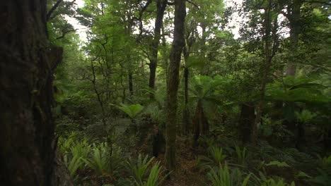 Panning-Across-Dense-Woodland