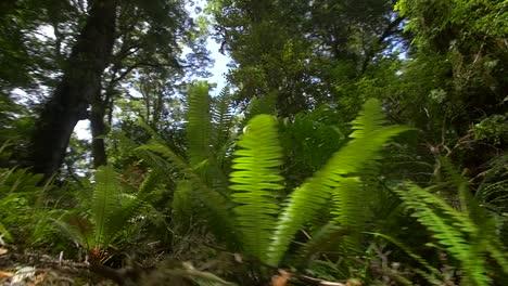 Tracking-Along-Jungle-Floor