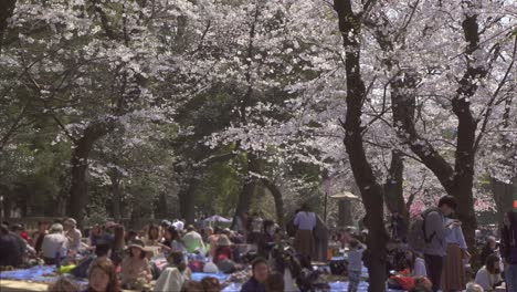 Tourists-Sat-Beneath-Sakura-Trees