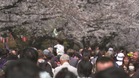 Tourists-Walking-Beneath-Sakura