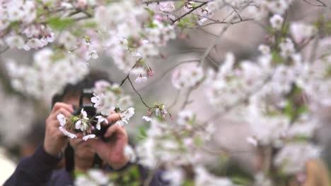 Tourist-Taking-Photos-of-White-Cherry-Blossom