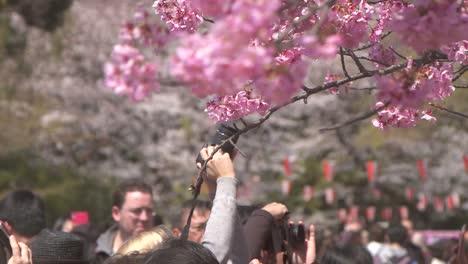 Photographing-Sakura