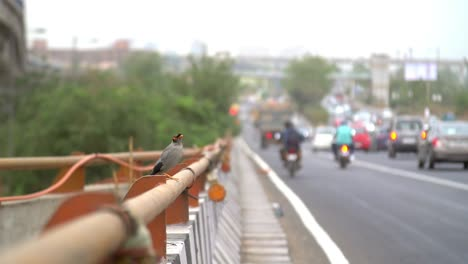Small-Bird-Flying-Away-from-Busy-Road