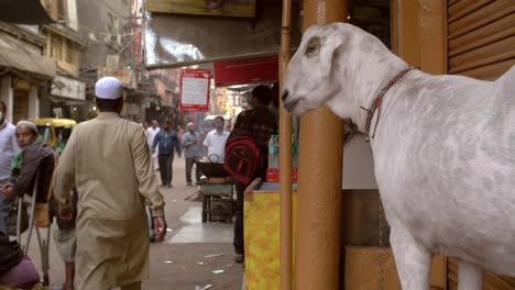 Goat-in-a-Busy-Delhi-Street