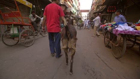 Man-Walking-With-Goat-on-Busy-Indian-Street