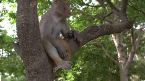 Monkey-Sat-in-Tree