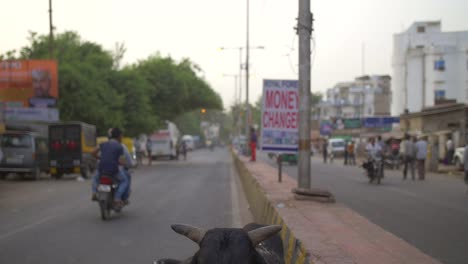 Shot-Panning-Up-From-Cow-to-Road