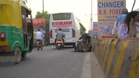 Cow-Laying-in-Busy-Indian-Road
