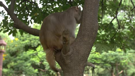 Handheld-Shot-of-a-Monkey-in-a-Tree