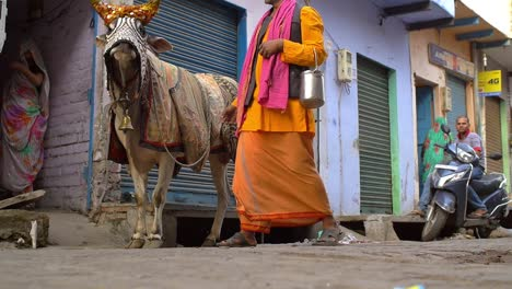 Indian-Man-Leading-a-Cow-Down-the-Street
