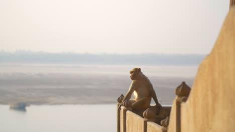 Monkey-Sat-on-Wall