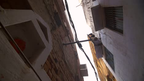 Monkey-Climbing-Alleyway-Wall