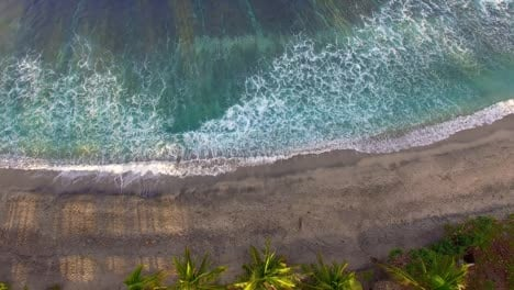 Aerial-Shot-of-Beach-and-Palm-Trees