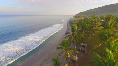 Flying-Through-Palm-Trees-Along-Beach-2