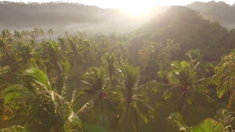 Flight-Through-Palm-Trees-at-Sunrise