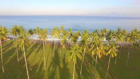Flying-Low-Over-Palm-Trees-Towards-Ocean