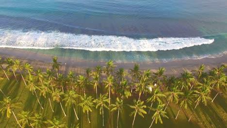 Flight-Over-Palm-Trees-Tilt-Up-to-Ocean