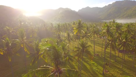 Flying-Over-Palm-Trees-at-Sunrise