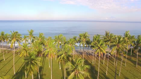 Ascending-Over-Palm-Trees-and-Beach