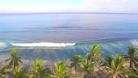 Raising-Up-Over-Palm-Trees-on-Beach