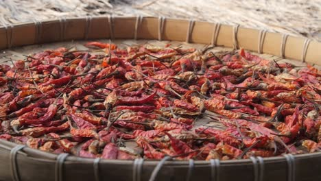 Panning-Over-Chili-Peppers-Drying-in-the-Sun