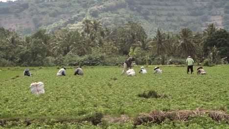 Workers-in-an-Indonesian-Field