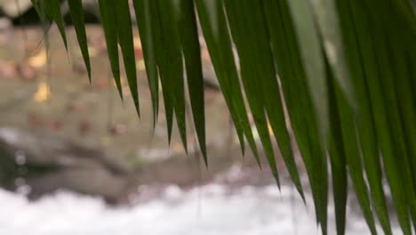 Focus-Pull-from-Stream-to-Palm-Fronds