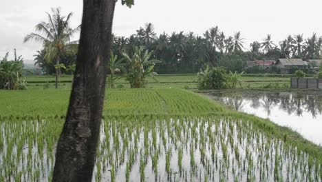 Tracking-Along-Indonesian-Rice-Paddies