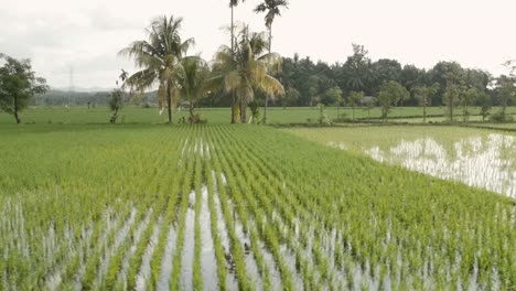Tracking-Along-Indonesian-Paddy-Fields