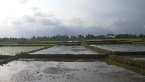 Waterlogged-Indonesian-Farmland