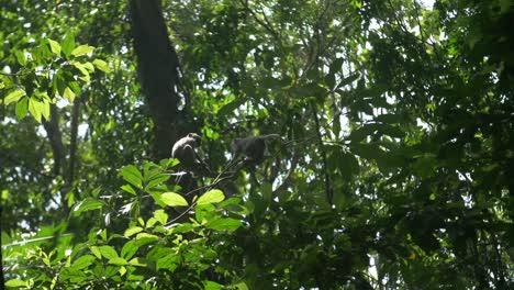 Two-Monkeys-Sitting-in-a-Tree