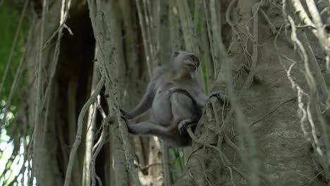 A-Monkey-Sitting-in-a-Tree-Looking-Around
